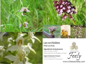 orchidees_orchids_chateau_feely