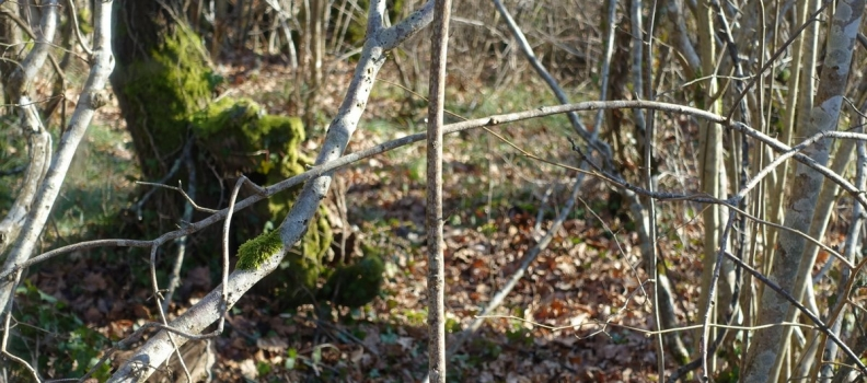 Conservation area at Chateau Feely: where the wild things are