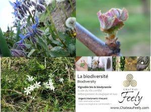 biodiversity_biodiversite_chateau_feely