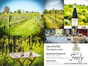 Why choose organic wine three reasons in depth