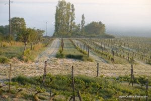 Frost in the vines 27 April 2017