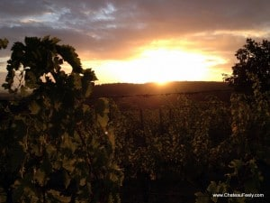 Beautiful dawn at Chateau Feely organic vineyard