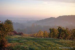 Spectacular vineyard views
