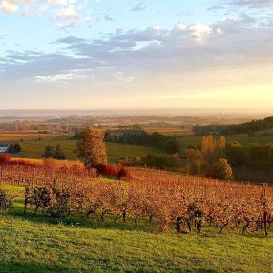 Autumn_chateau_feely_organic_biodynamic_vineyard