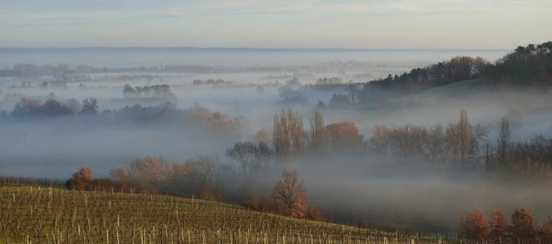 Why Organic wine? part 3 pesticides