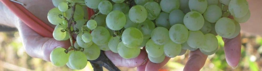 Vineyard and Domain