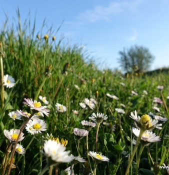 Spring has sprung bringing feelings of joy and schizophrenia