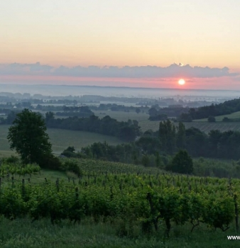 What does the heatwave mean for the vines?
