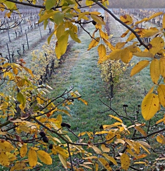 Love and care: going the extra mile with handwork in the vineyard