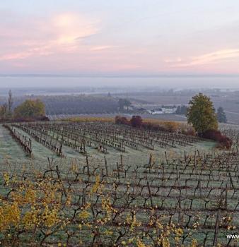 Breathtaking Vineyard Photos – Chateau Feely organic biodynamic estate