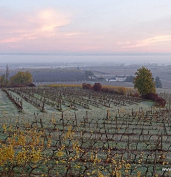 Breathtaking Vineyard Photos – Chateau Feely organic biodynamic estate