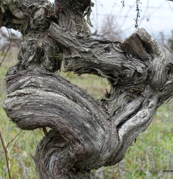 Whispers in the Winter Vines – a Chateau Feely poem