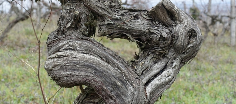 Whispers in theWinter Vines – a Chateau Feely poem