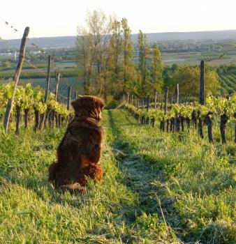 Living Magazine – Caro Feely Wine Writer articles