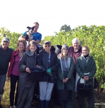 Harvest 2017 handpicking at Feely organic biodynamic vineyard